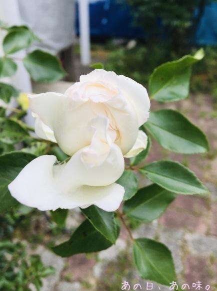【ふたり弁】揚げない唐揚げ。おやつと薔薇と、懸賞当たった。_a0305046_10335328.jpg