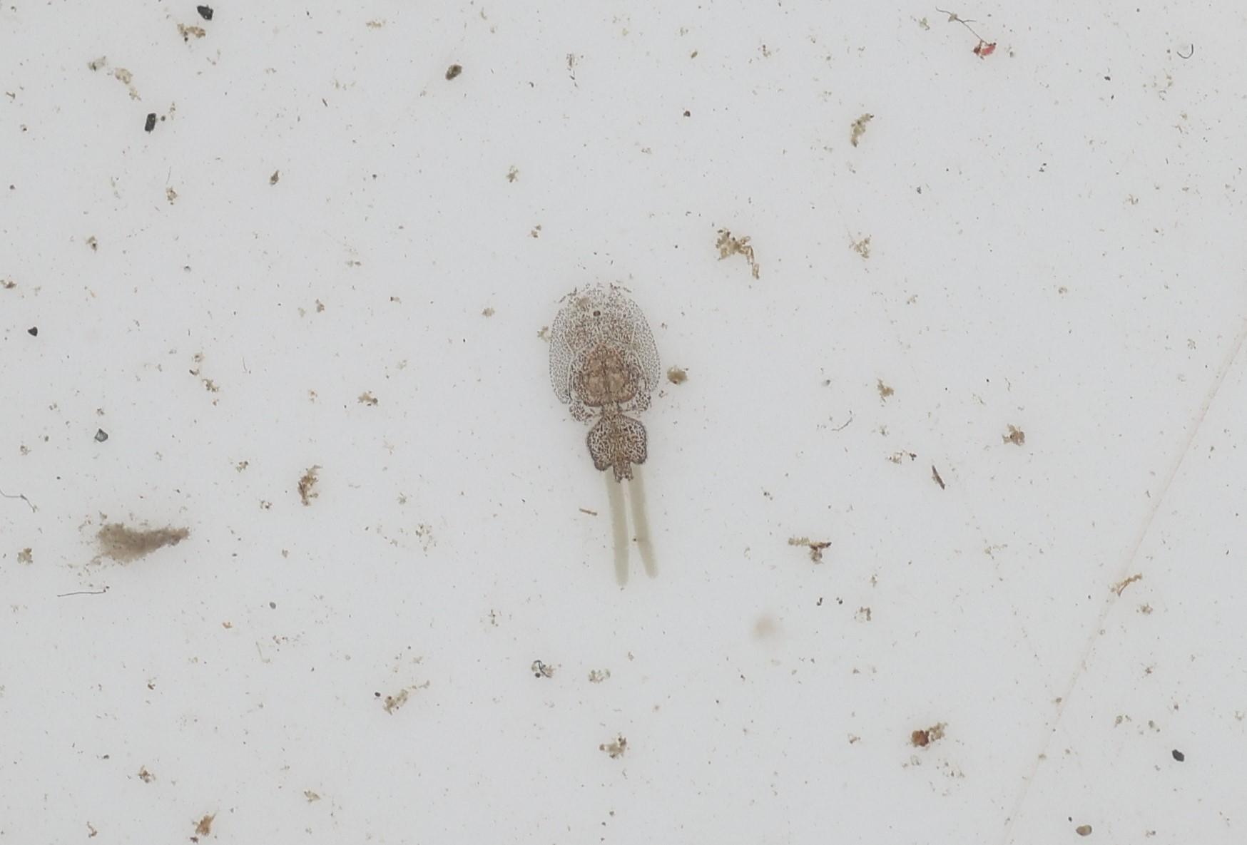 5月17日の水生生物調査_e0046474_16401778.jpg
