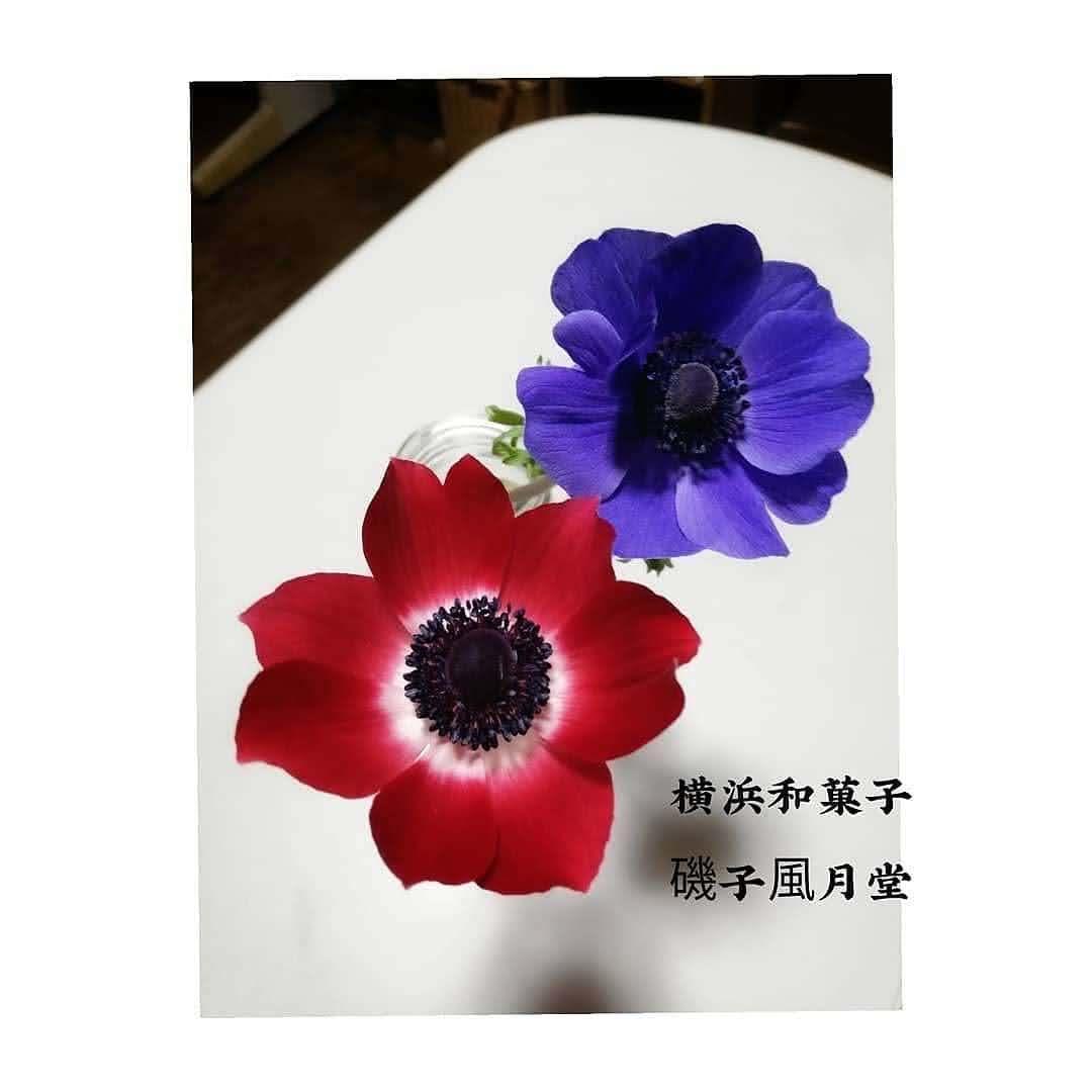 北欧茶会 天然色素で染めたレトロな青いアネモネ 磯子風月堂_e0092594_10135856.jpg