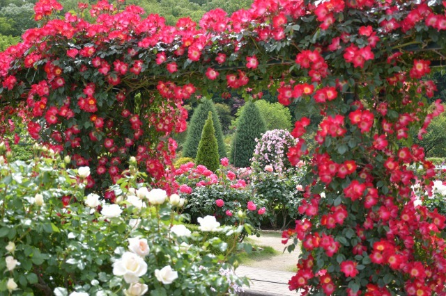 薔薇が美しく咲くガーデンへ ~ あしかがフラワーパーク Ⅰ_b0356401_21390699.jpg