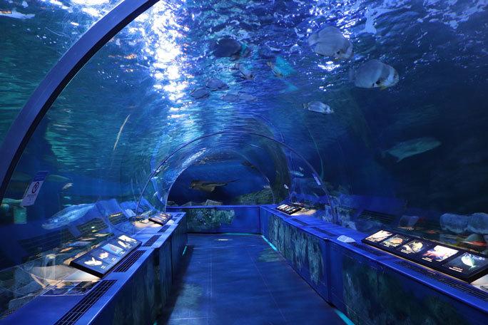 しながわ水族館「トンネル水槽」①~古代魚ターポンとサメたち(August 2020)_b0355317_21284727.jpg