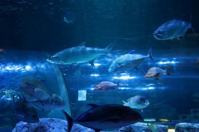 しながわ水族館「トンネル水槽」③~多彩な魚たち(August 2020)_b0355317_21284478.jpg