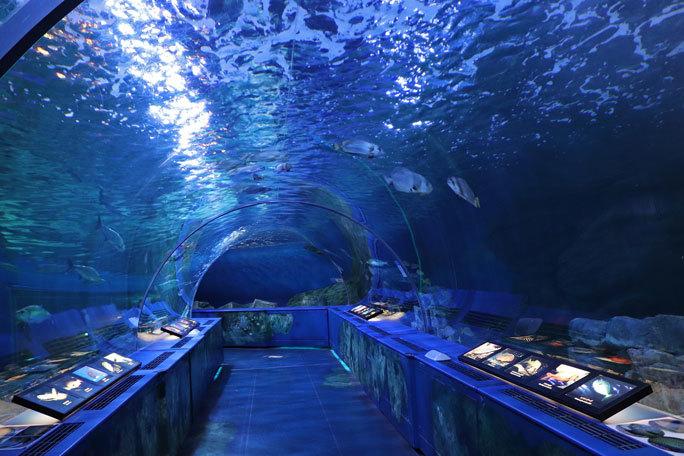 しながわ水族館「トンネル水槽」③~多彩な魚たち(August 2020)_b0355317_21292276.jpg