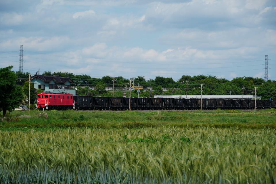 麦畑を行くSL長瀞蔵号とEL貨物列車ー2021年5月23日ー_a0385725_21573927.jpg