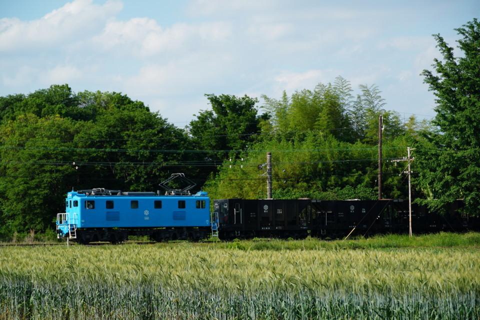 麦畑を行くSL長瀞蔵号とEL貨物列車ー2021年5月23日ー_a0385725_21580901.jpg