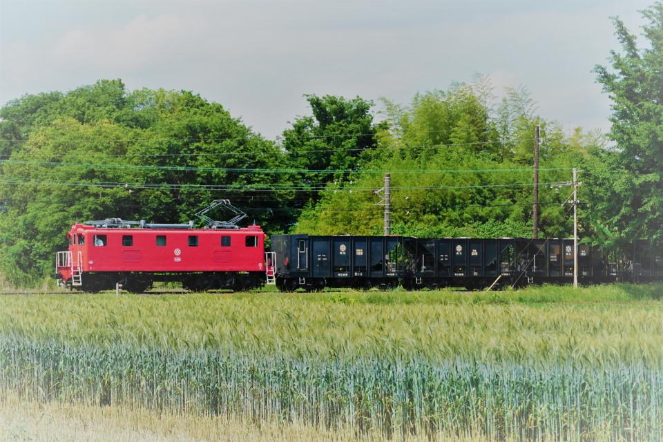麦畑を行くSL長瀞蔵号とEL貨物列車ー2021年5月23日ー_a0385725_21582099.jpg