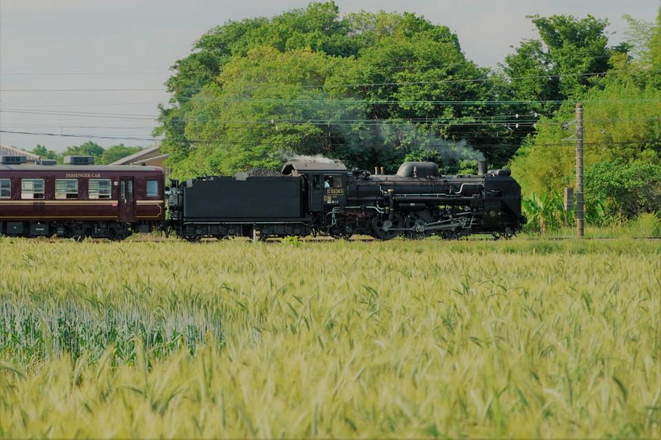 麦畑を行くSL長瀞蔵号とEL貨物列車ー2021年5月23日ー_a0385725_21583345.jpg