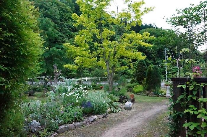 小道を広げて、庭に車が入るように_e0365880_21213710.jpg