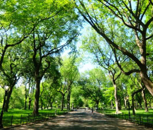 セントラルパーク内最大の並木道、新緑編、バーチャルお散歩動画_b0007805_00553559.jpg