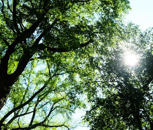 セントラルパーク内最大の並木道、新緑編、バーチャルお散歩動画_b0007805_00554021.jpg