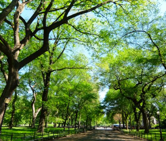 セントラルパーク内最大の並木道、新緑編、バーチャルお散歩動画_b0007805_00555183.jpg