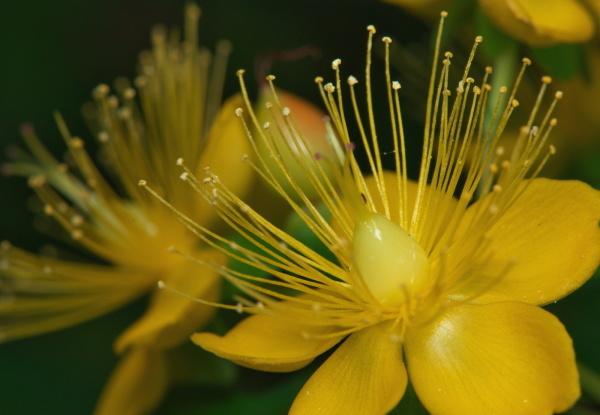 天体望遠鏡でお庭の花を撮る遊び_f0346040_21213126.jpg