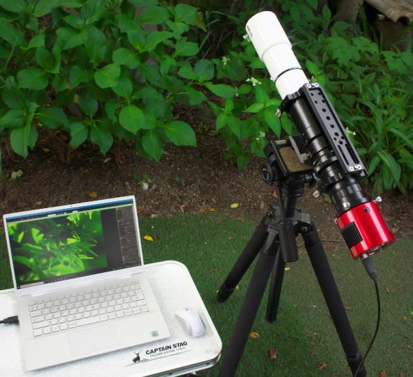 天体望遠鏡でお庭の花を撮る遊び_f0346040_21290259.jpg