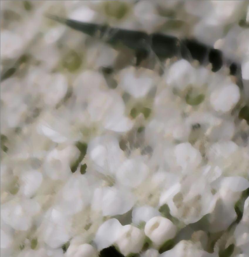 天体望遠鏡でお庭の花を撮る遊び_f0346040_21563252.jpg