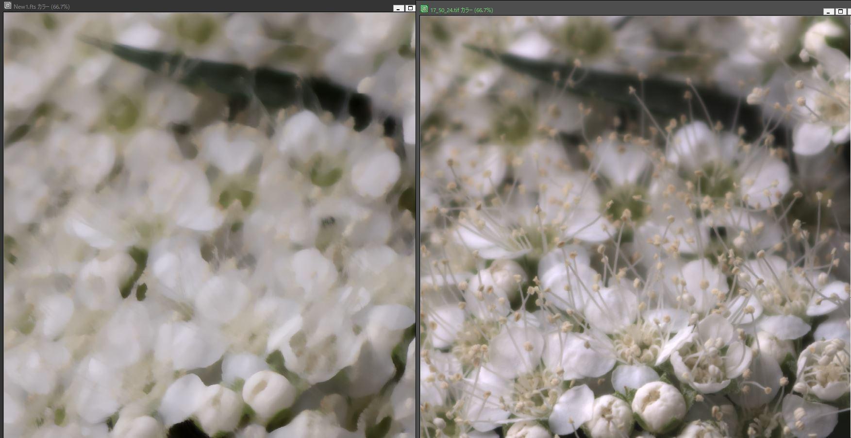 天体望遠鏡でお庭の花を撮る遊び_f0346040_22001367.jpg