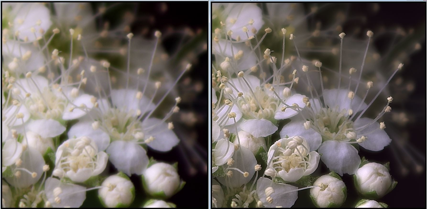 天体望遠鏡でお庭の花を撮る遊び_f0346040_22180355.jpg