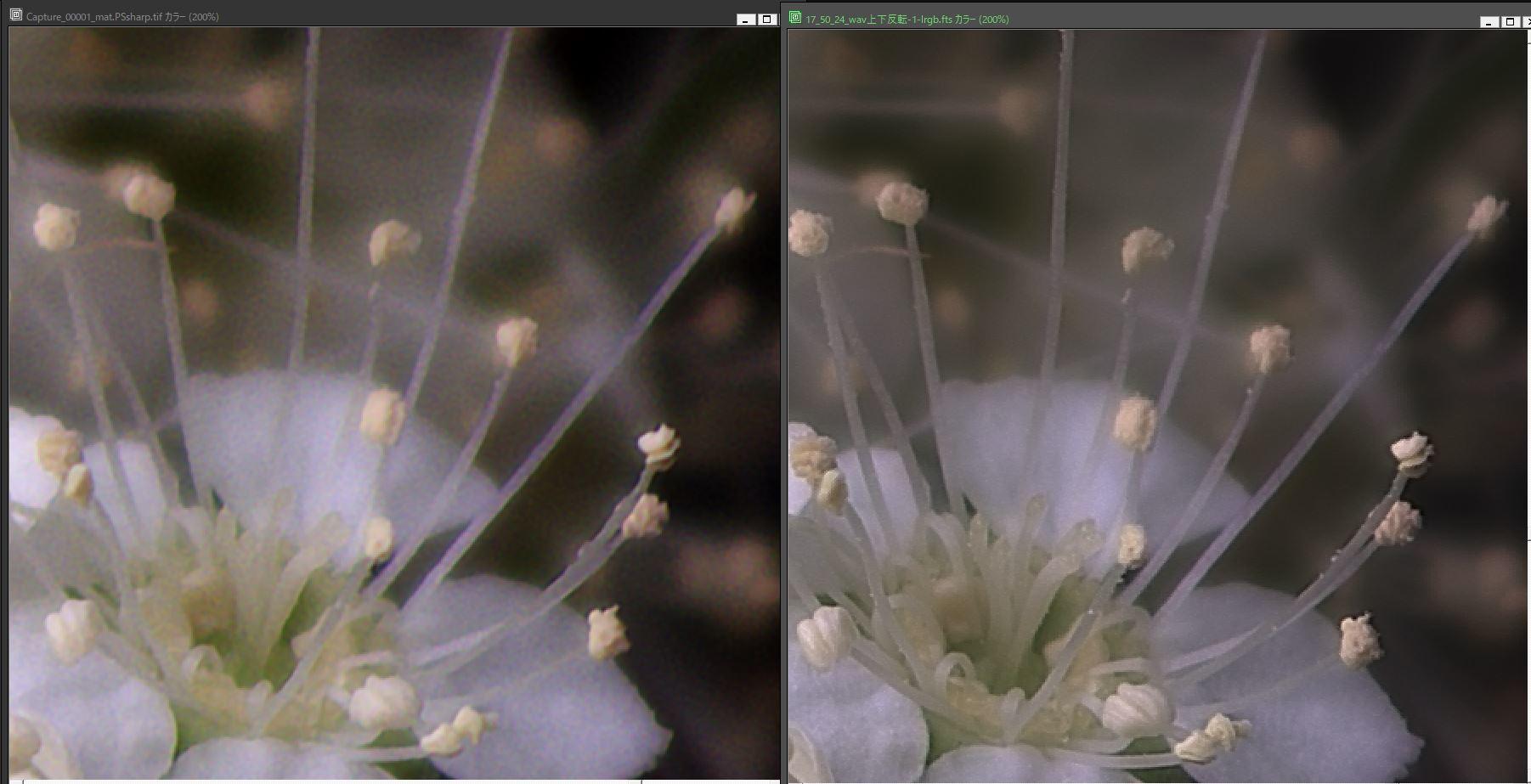 天体望遠鏡でお庭の花を撮る遊び_f0346040_22235320.jpg