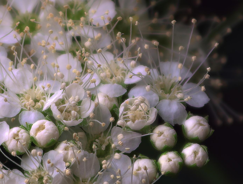 天体望遠鏡でお庭の花を撮る遊び_f0346040_22470977.jpg