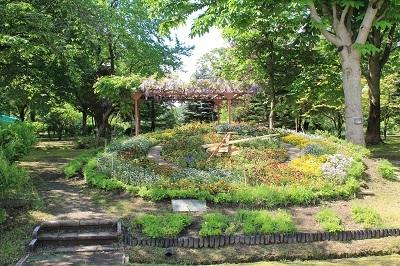 弘前城植物園のハンカチツリー_2021.05.24撮影_d0131668_11375172.jpg
