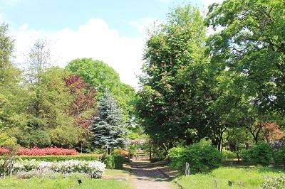 弘前城植物園のハンカチツリー_2021.05.24撮影_d0131668_11431183.jpg