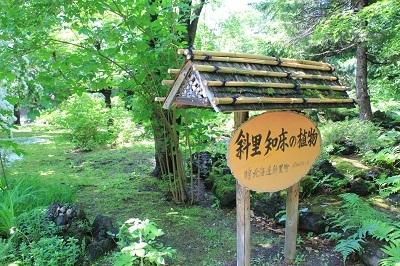 弘前城植物園のハンカチツリー_2021.05.24撮影_d0131668_11472718.jpg