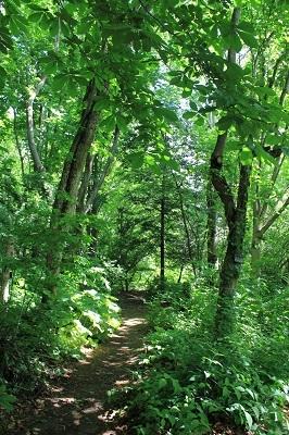 弘前城植物園のハンカチツリー_2021.05.24撮影_d0131668_11490269.jpg