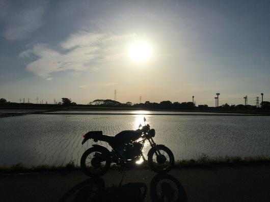 ちょっと河原の様子を見に…_a0078772_19065425.jpeg