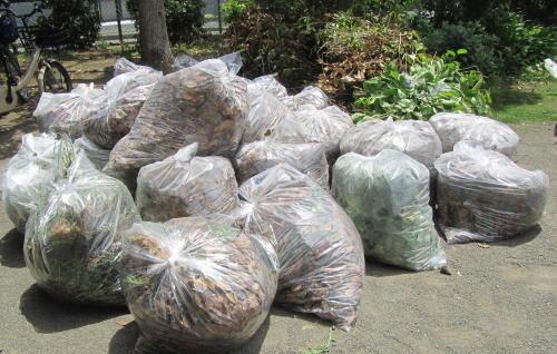 地元老人会によるボランティア公園清掃_c0220597_19374530.jpg