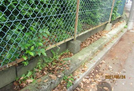 地元老人会によるボランティア公園清掃_c0220597_19404673.jpg