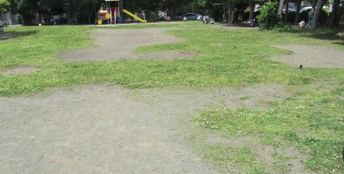 地元老人会によるボランティア公園清掃_c0220597_19471534.jpg