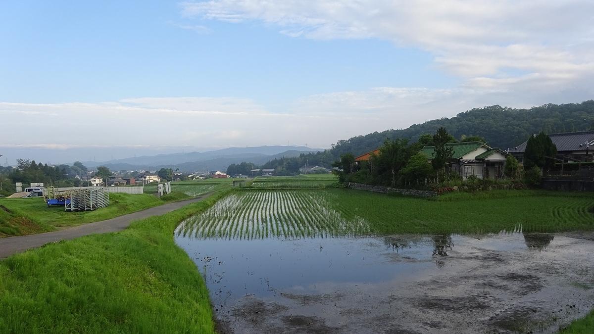 田んぼの美しい時期です。_d0181824_16172654.jpg