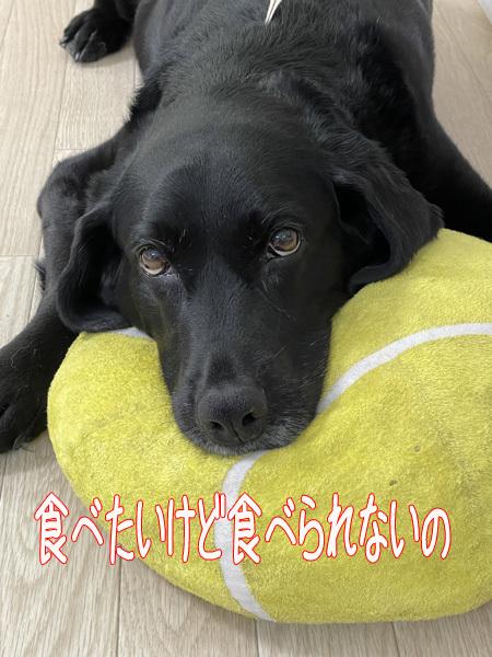 ♪ 天才犬 クロちゃん ♪_c0161772_00291629.jpg