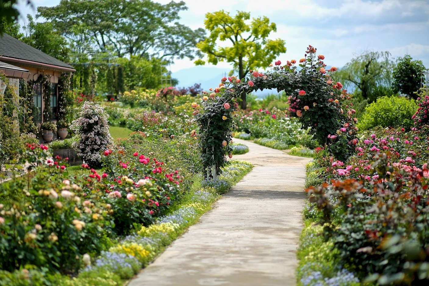 柳ヶ崎湖畔公園  -The Rose Garden-_c0196076_19130885.jpg