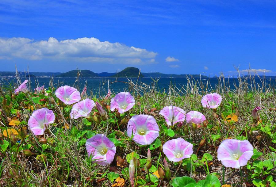 浜辺に咲く花_e0093903_10485816.jpg