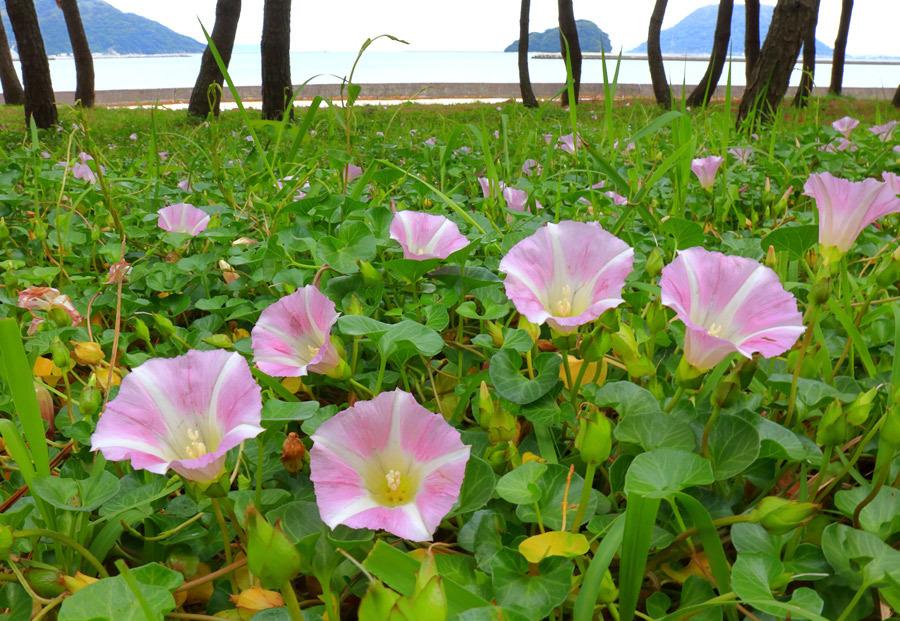 浜辺に咲く花_e0093903_10490656.jpg