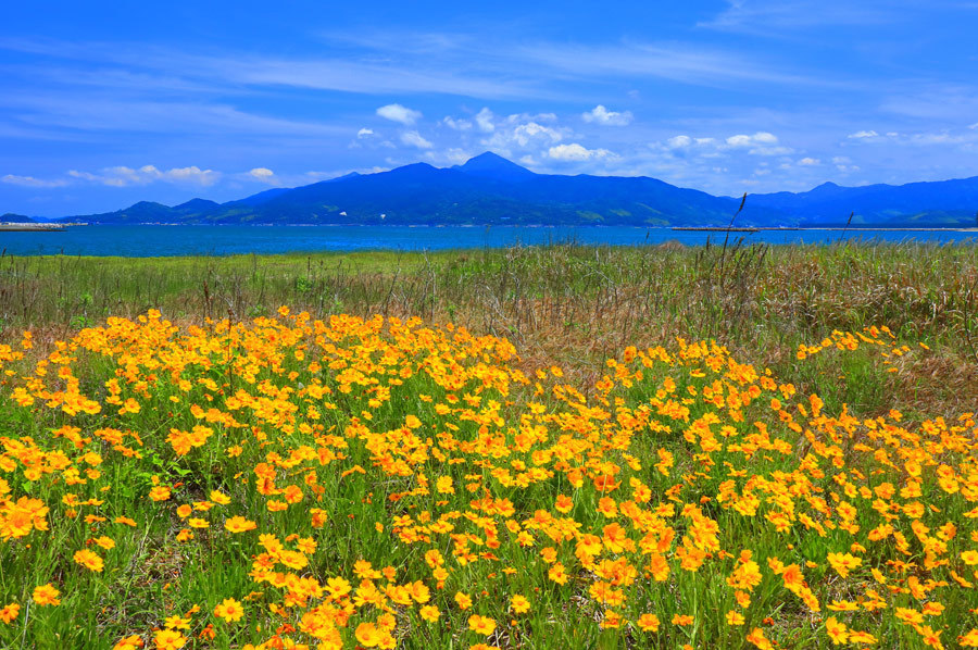 浜辺に咲く花_e0093903_10492594.jpg