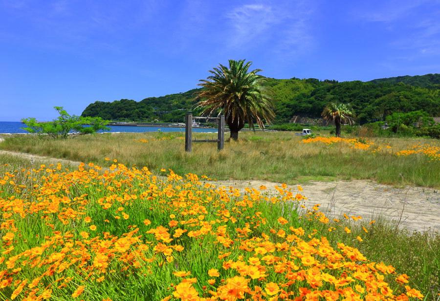 浜辺に咲く花_e0093903_10493878.jpg