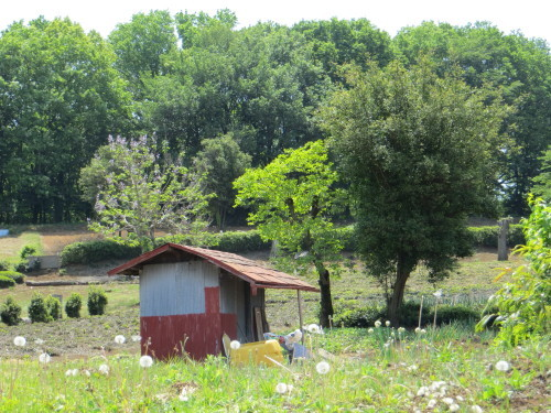 壊れた小屋。_b0129807_21392143.jpg
