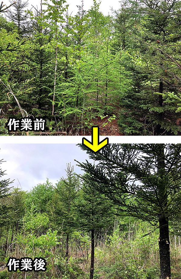 5月23日(日) 北山山林 間伐・材の搬出等_c0173813_09175001.jpg