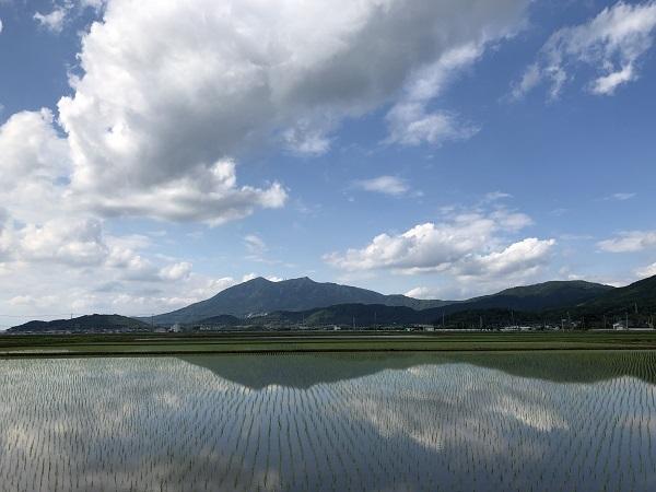 筑波山と庭の花と梅仕事_b0100229_14025812.jpg
