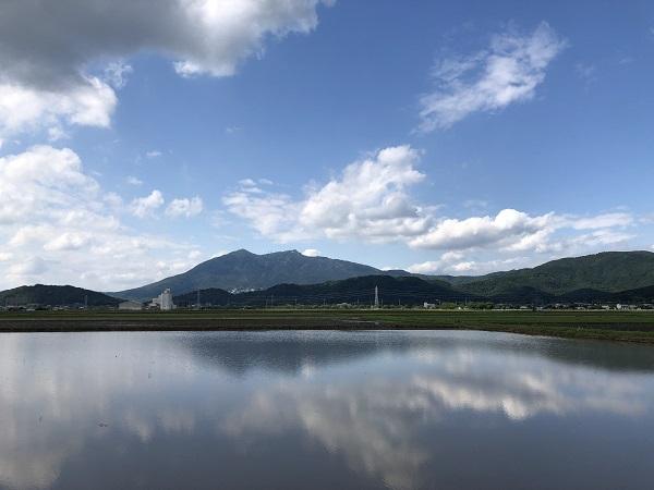 筑波山と庭の花と梅仕事_b0100229_14031522.jpg