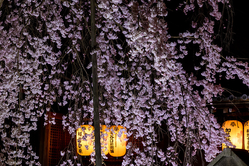 2021桜咲く京都 縣神社の木乃花桜_f0155048_23010623.jpg