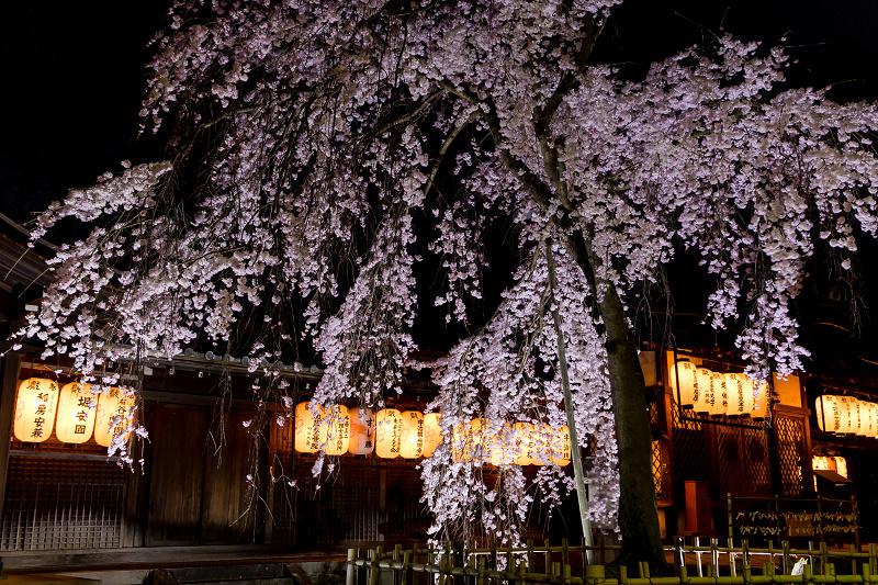 2021桜咲く京都 縣神社の木乃花桜_f0155048_23013820.jpg