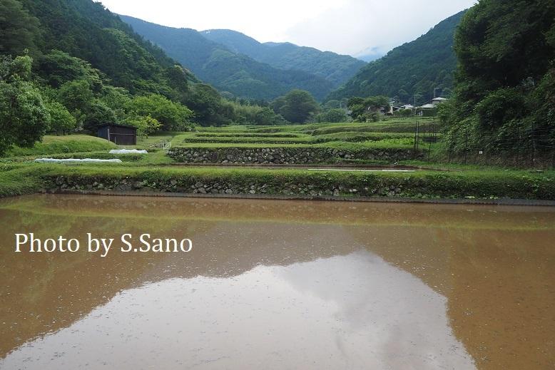 神奈川県央の里山(2021年5月末)_b0348205_15232253.jpg