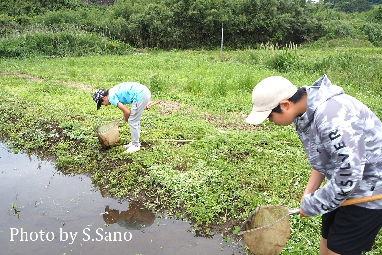 神奈川県央の里山(2021年5月末)_b0348205_15233565.jpg