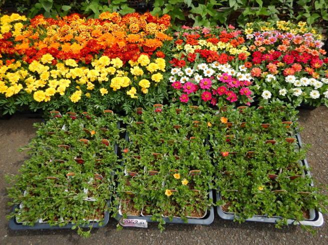 花壇の模様替え_c0401306_17311949.jpg