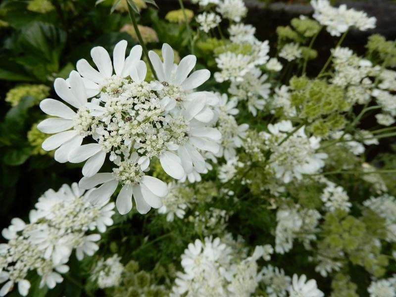 花の名、名… * le nom de cette fleur…_f0374041_14594169.jpg