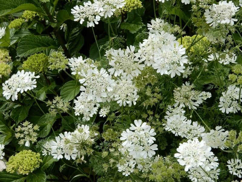 花の名、名… * le nom de cette fleur…_f0374041_15012071.jpg