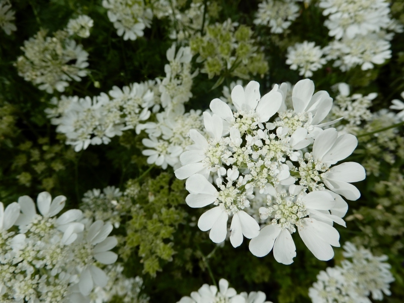 花の名、名… * le nom de cette fleur…_f0374041_15051244.jpg