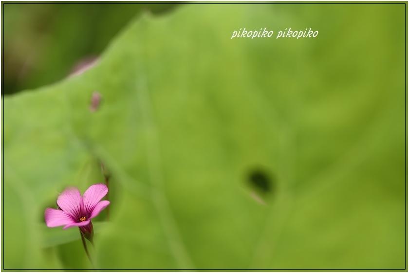 秘密の花園  _e0353681_00075399.jpg